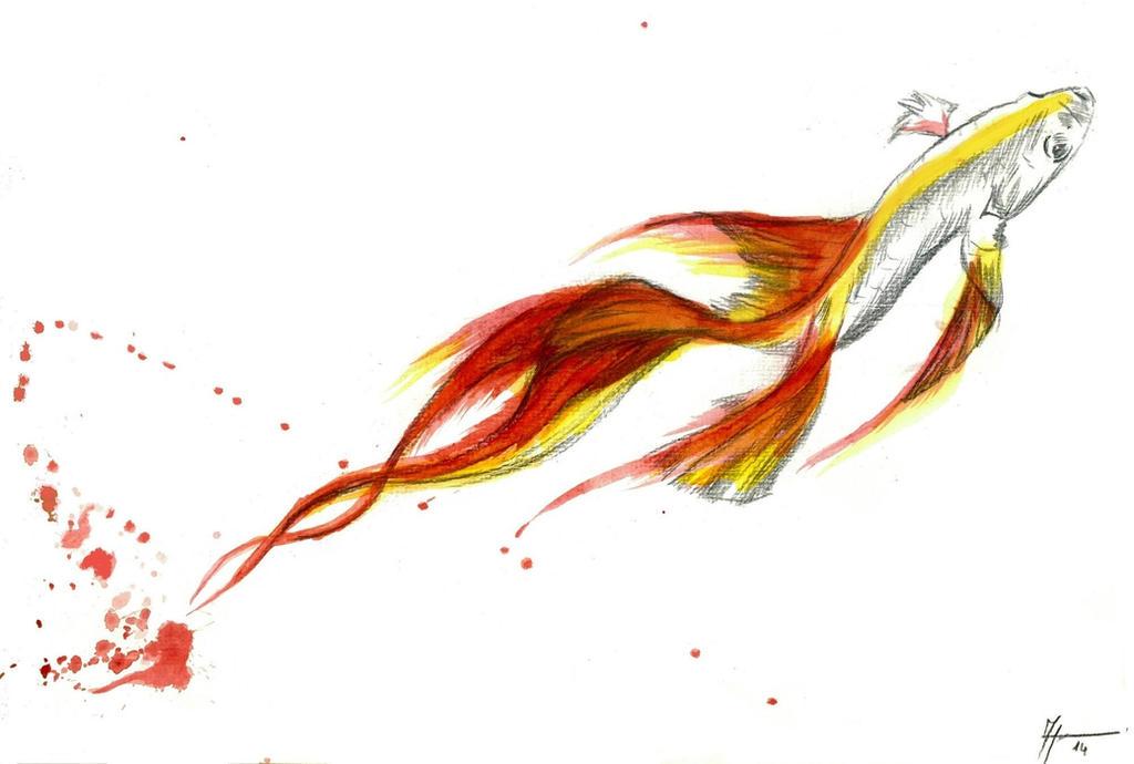 Betta Fish  / Dragonish 2 by justcallmemike