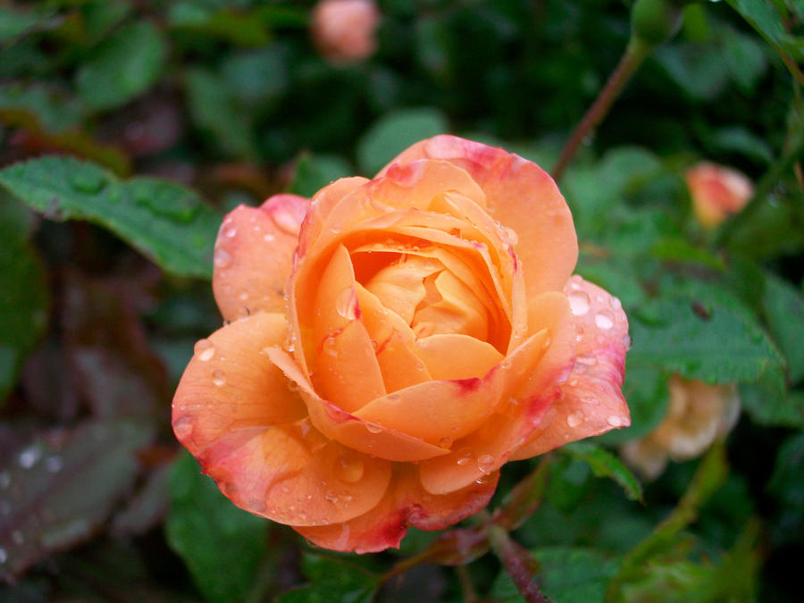 Pink orange flower by julieb12491 on deviantart pink orange flower by julieb12491 mightylinksfo