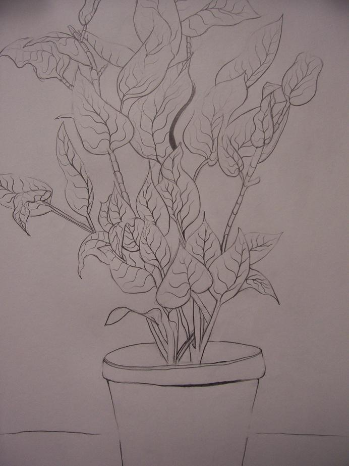 Contour Line Drawing Of A Flower : Contour line drawing plant by nartinalemaliki on deviantart