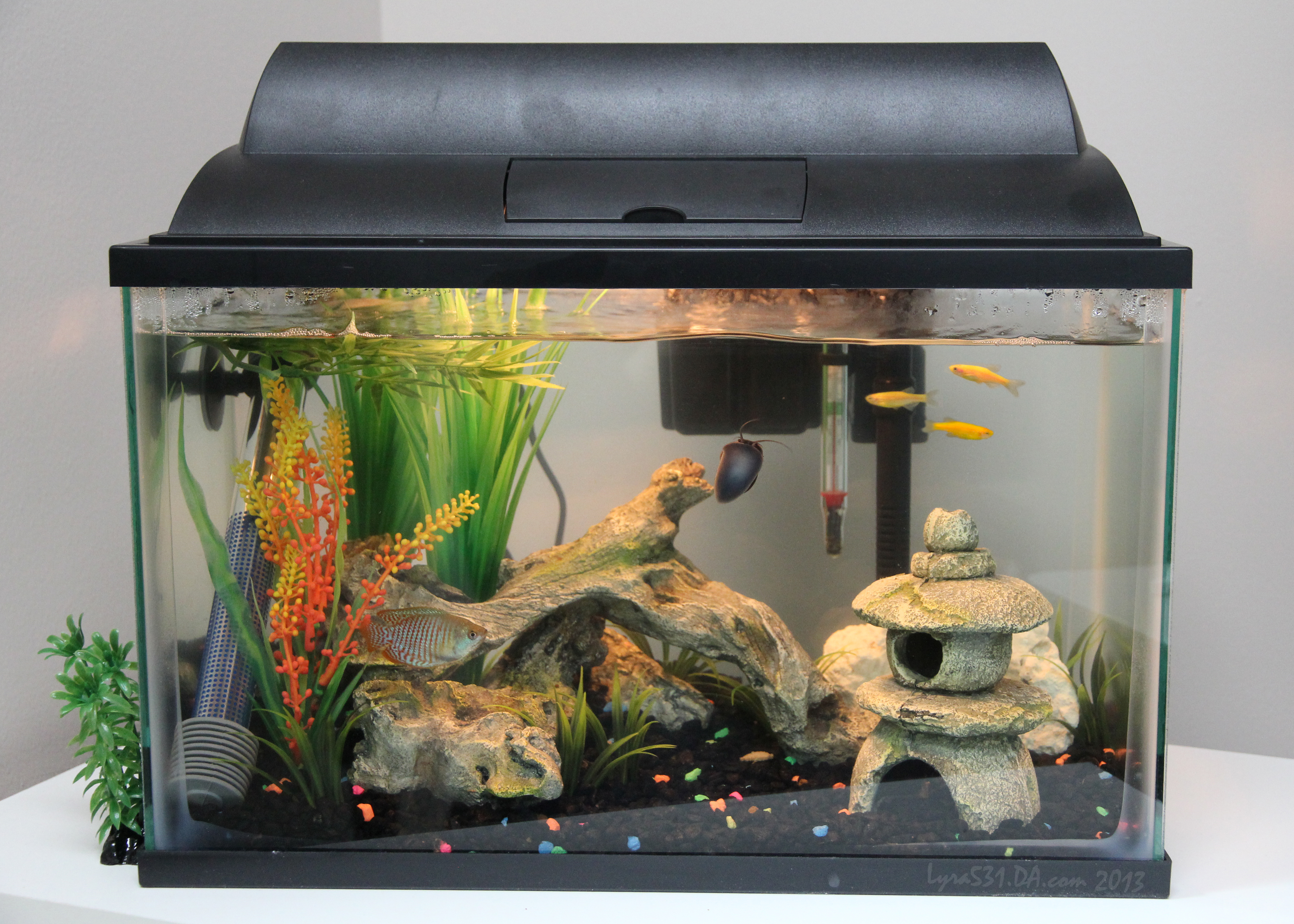 5 gallon fish tank how big how big is a 5 gallon fish for 5 gallon fish tanks