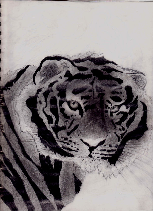 Tiger by JynxyChan