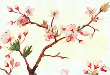 Cherry Blossom by gintoki6-16