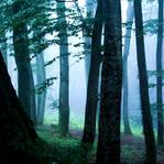 through the fog by DarkSaiF