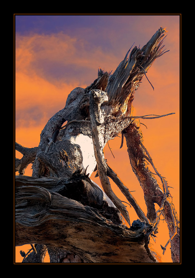 Wrath of Bregalad by 23-d