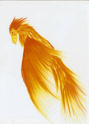Phoenix by Kivusa