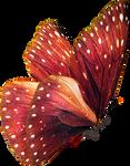 Butterfly Stock 59