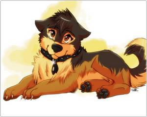 Mojak puppy