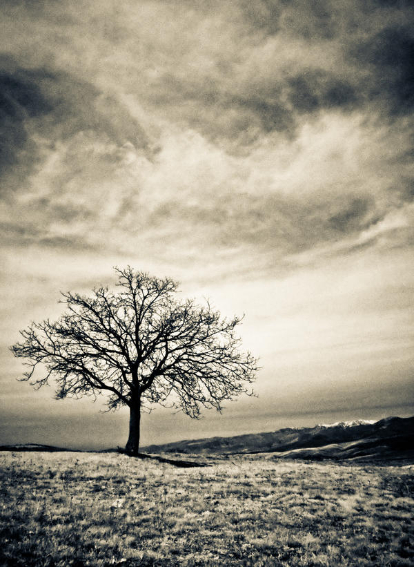 The tree II by rott-man