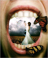 Conversations with butterflies by foils