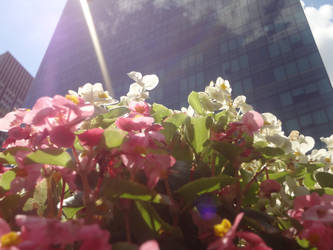 Flowers in NYC!