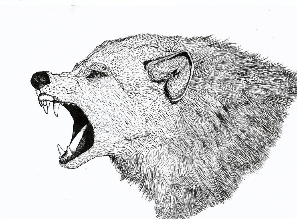 Pen and Ink Wolf by LaisHasekNogueira