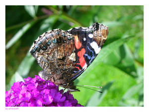 hungry butterfly
