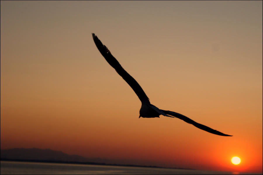 [Image: bird_and_night_sky_by_vercahasli-d5erayx.jpg]