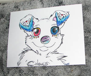Colours the Canine (Spitz Dog Mix) Quick Portrait by Eternalskyy