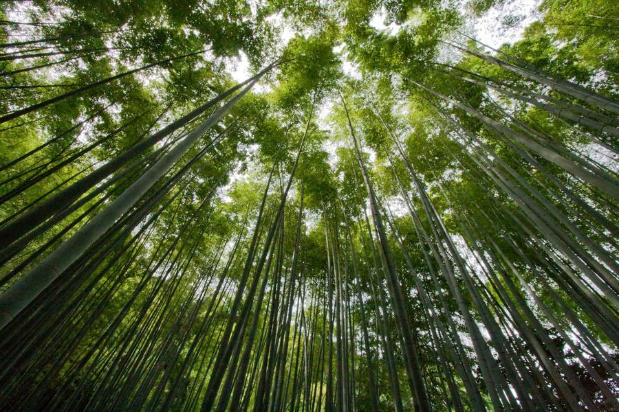 + Hokoku-ji + by YodMemHal