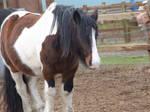its a horse!