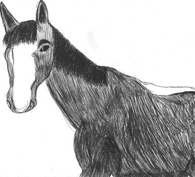 biro drawing of my horse mobey