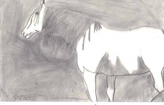 Horse drawring