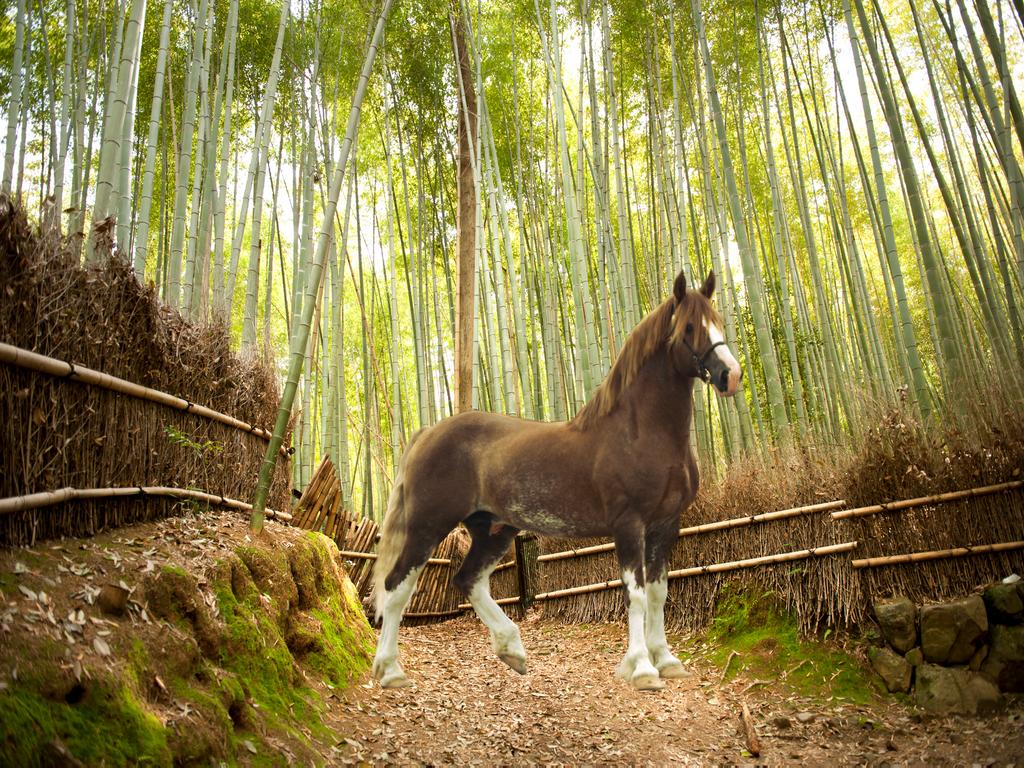 Bamboo Cob