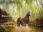 Ponybox