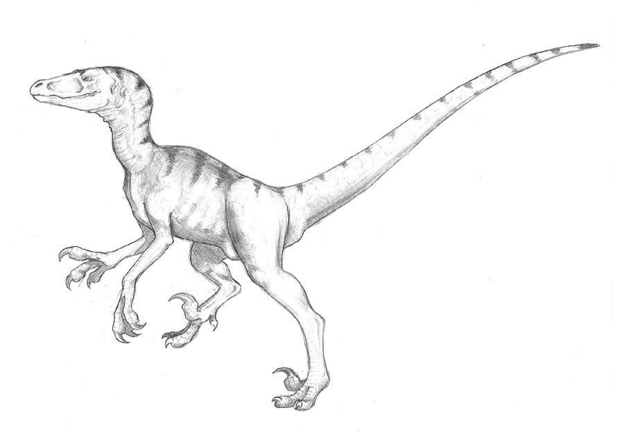 dinosaurus utah raptor coloring pages - photo#23