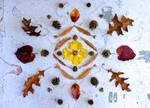 Natural object (Autumn) Mandala Installation