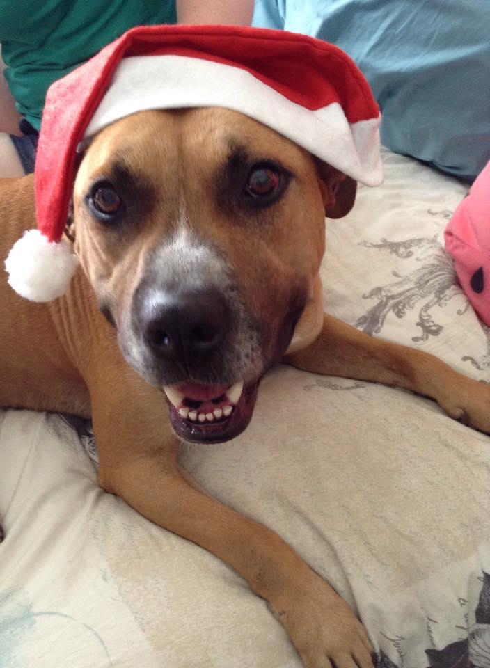 Christmas Seamus by Tora-Luv10