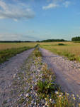 Road Through The Fields 2 by Nazahnel-stock
