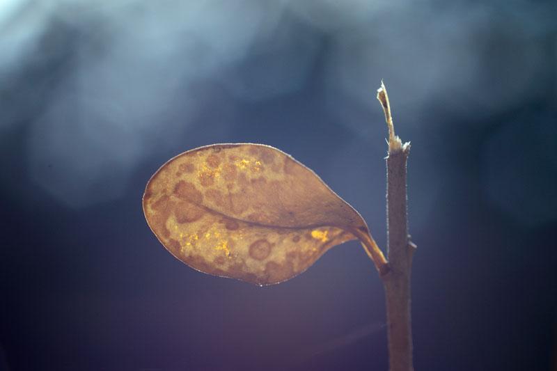 http://fc02.deviantart.net/fs70/f/2012/099/9/e/spring2_by_fripturici-d4vkbwl.jpg