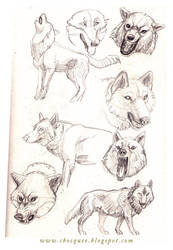 Sketchbook - wolves by cbocquee