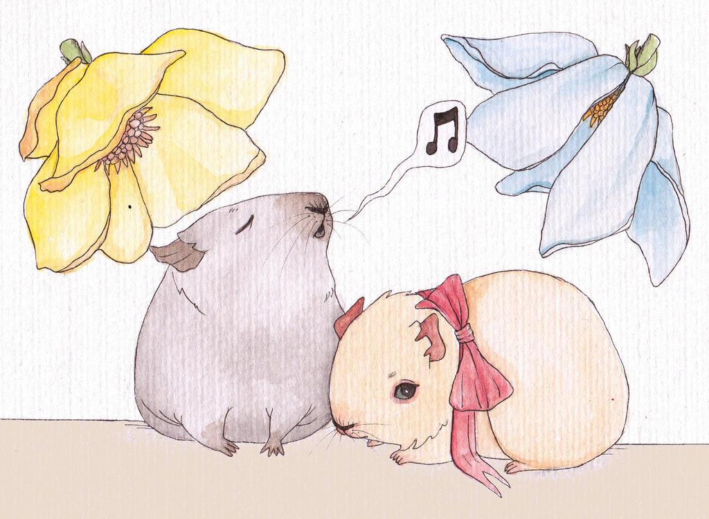 Guinea pig song by Busbi