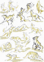 Quick dog sketches by tirin54