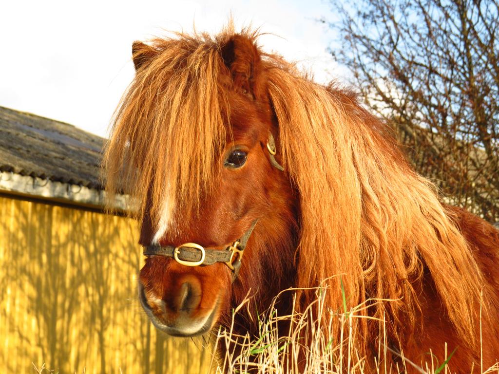 Red pony by tirin54