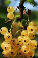 Berries by Igotdonuts