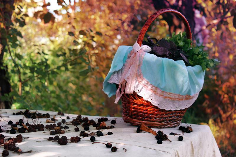 Basket by Igotdonuts
