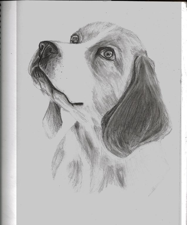 Beagle by moviefan6896