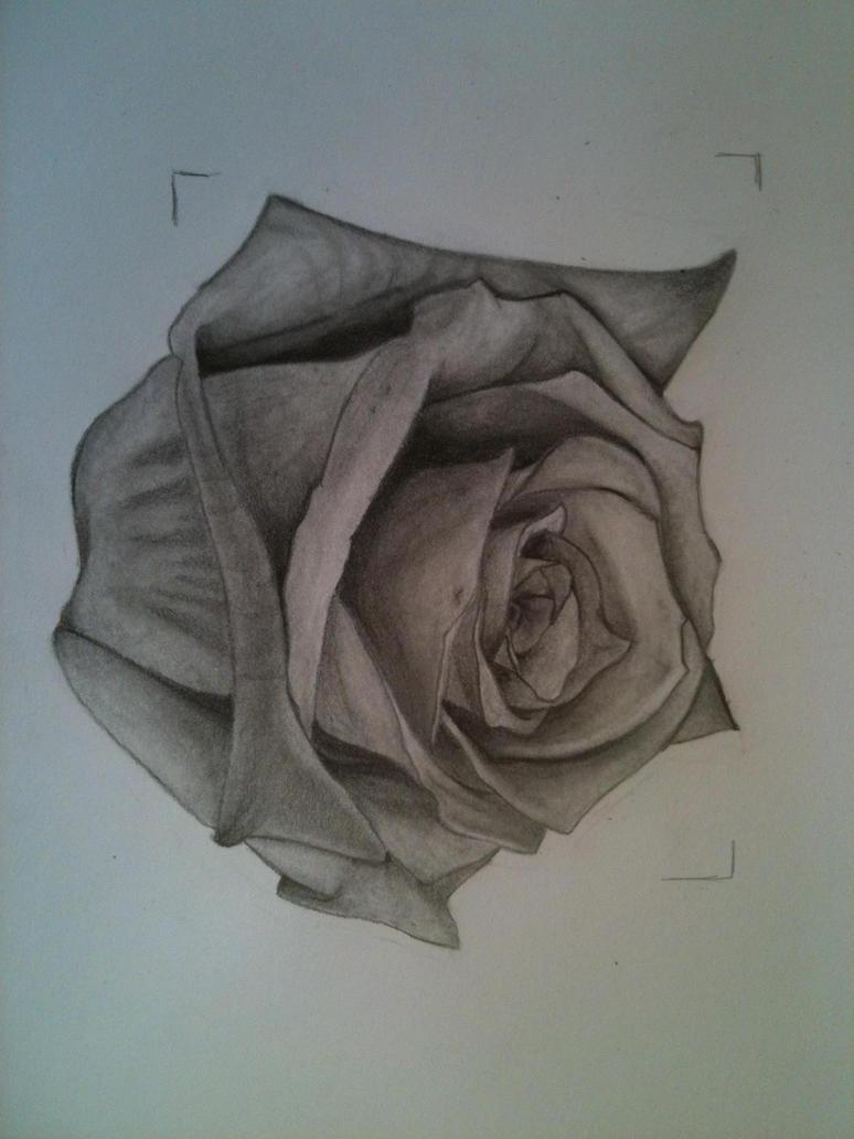 Graphite Rose Tattoo by LupusAnima on DeviantArt