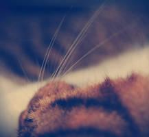 sweet dreams, my fluffy