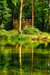 Greener Reflections