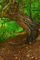 Under The Old Oak Tree by GaryTaffinder