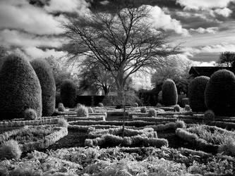 Ornamental and Infrared by GaryTaffinder