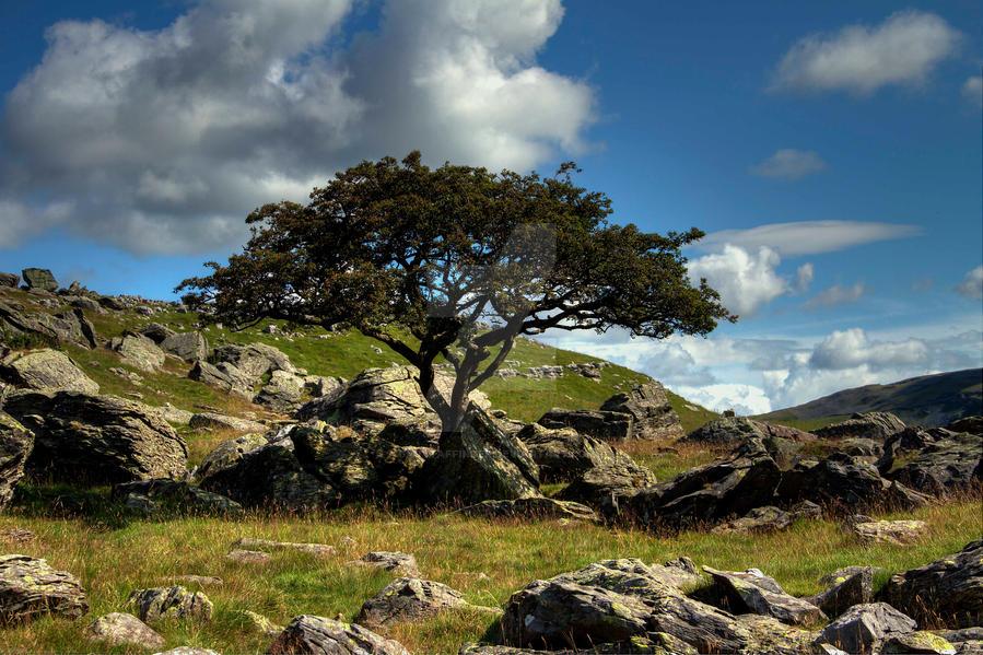 Tree View by GaryTaffinder