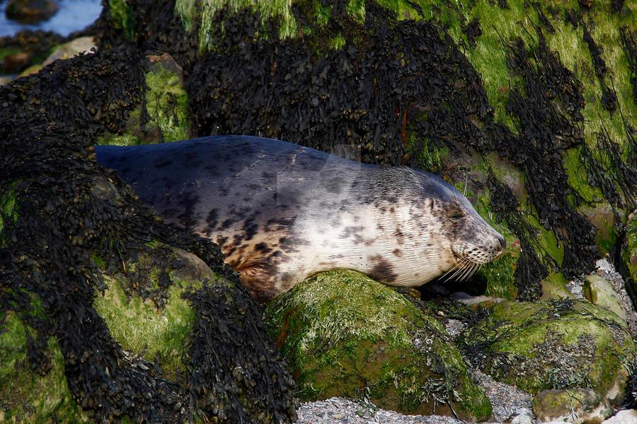 Let sleeping Seals lie. by GaryTaffinder