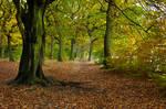 Autumn at Judy Woods - Wyke - UK.