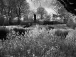 Scatcherd Park - Morley - Leeds - UK (infrared) by GaryTaffinder