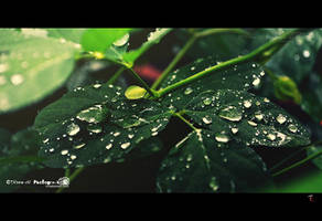 On a rainy day by TRNS