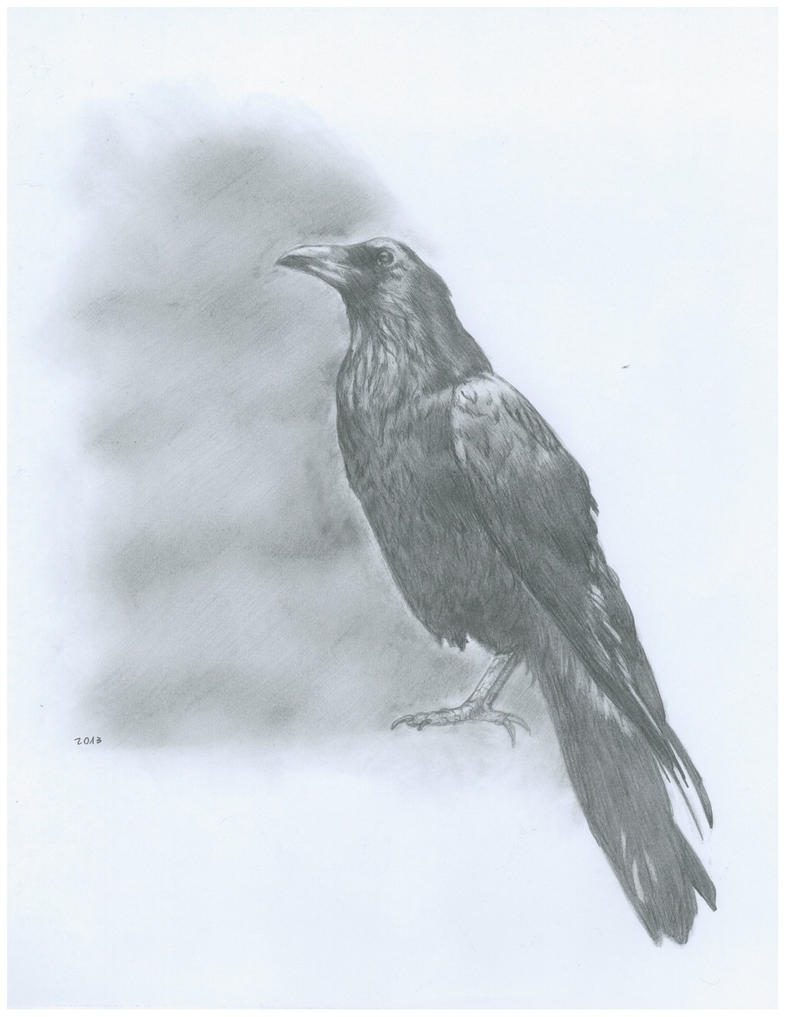 the gallery for gt flying crow drawing