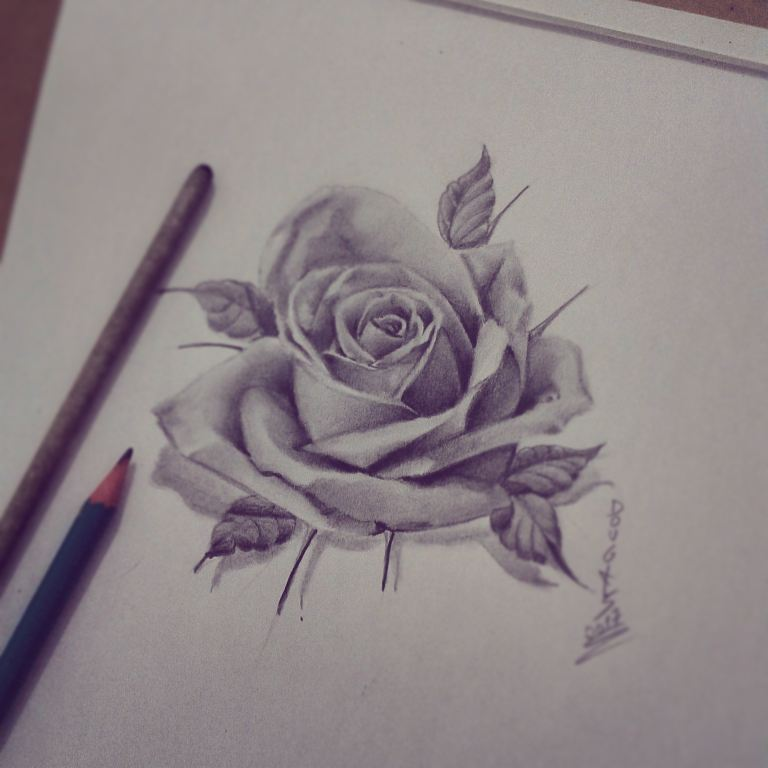 Rose by DOUGLASDRACO