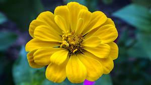 Flower 125