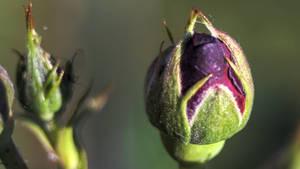 Flowers 216